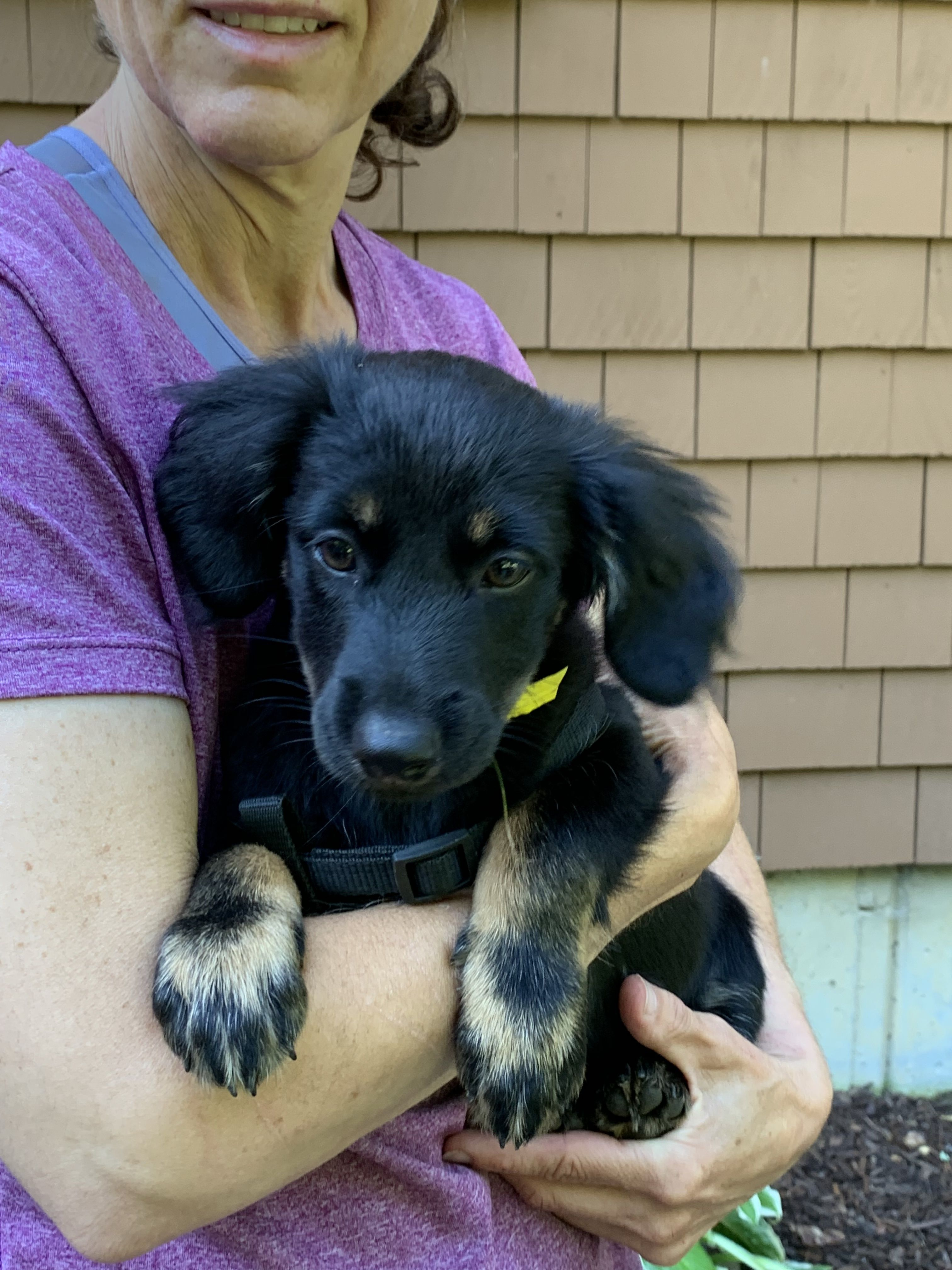 Puppies for rescue in ct
