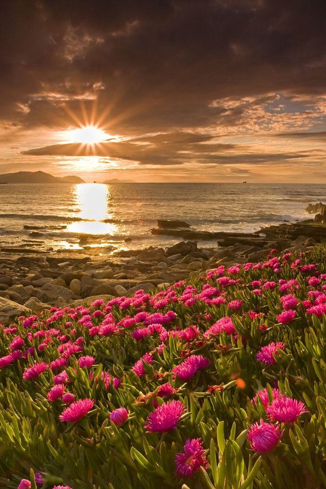 Amazing Sunset & Photography : )  #photography