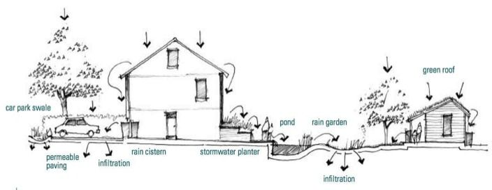Rain garden schematic by Nigel Dunnett, author of Rain