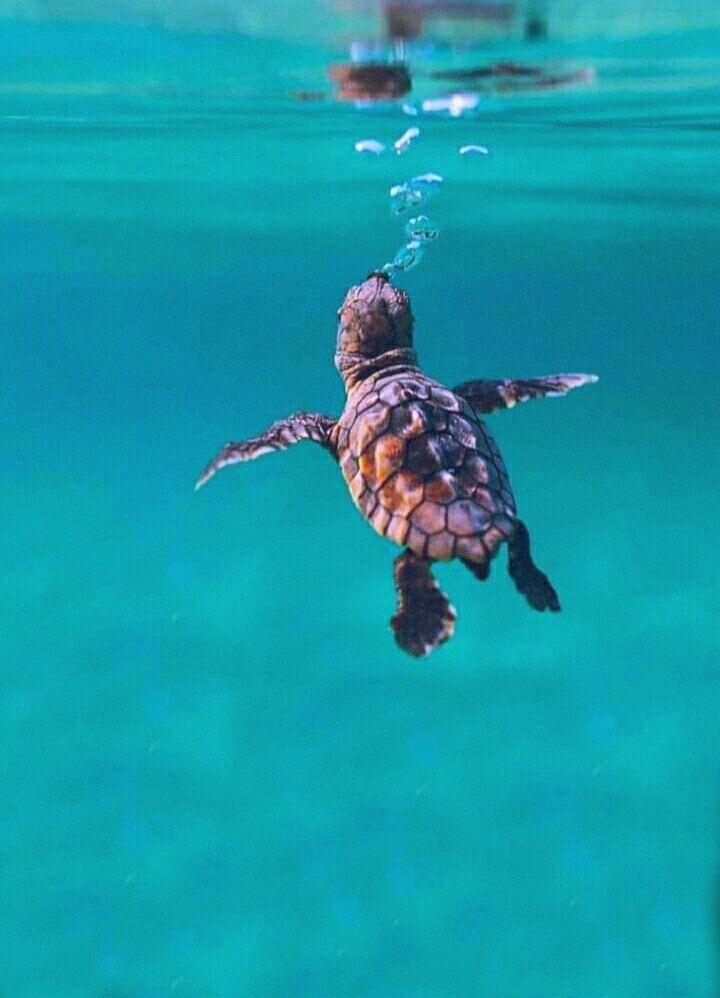 26+ Baby Sea Turtle Phone Wallpaper Gif