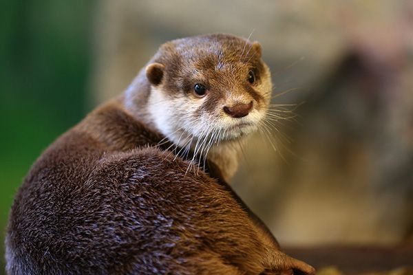 Model otter gives the over-the-shoulder pose - July 27, 2015