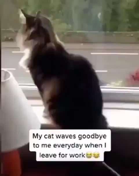 Goodbye, See you later