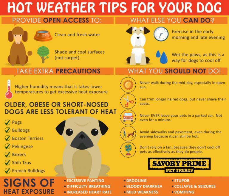 Hot Weather Tips For Your Dog Training Your Dog Dog Care Tips