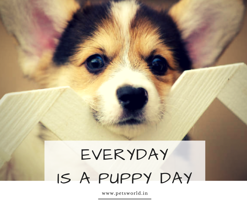Every Day Is A Puppy Day Isn T It Petsworld Puppylove Dogs Dogsofinstagram Dog Puppy Buy Pets Puppies Puppy Day