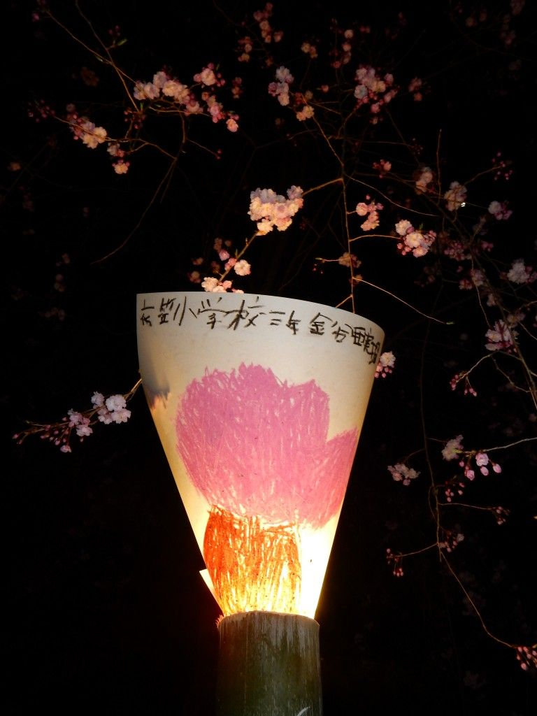 Cherry blossoms  and paper lanterns painted by primary schoolchildren