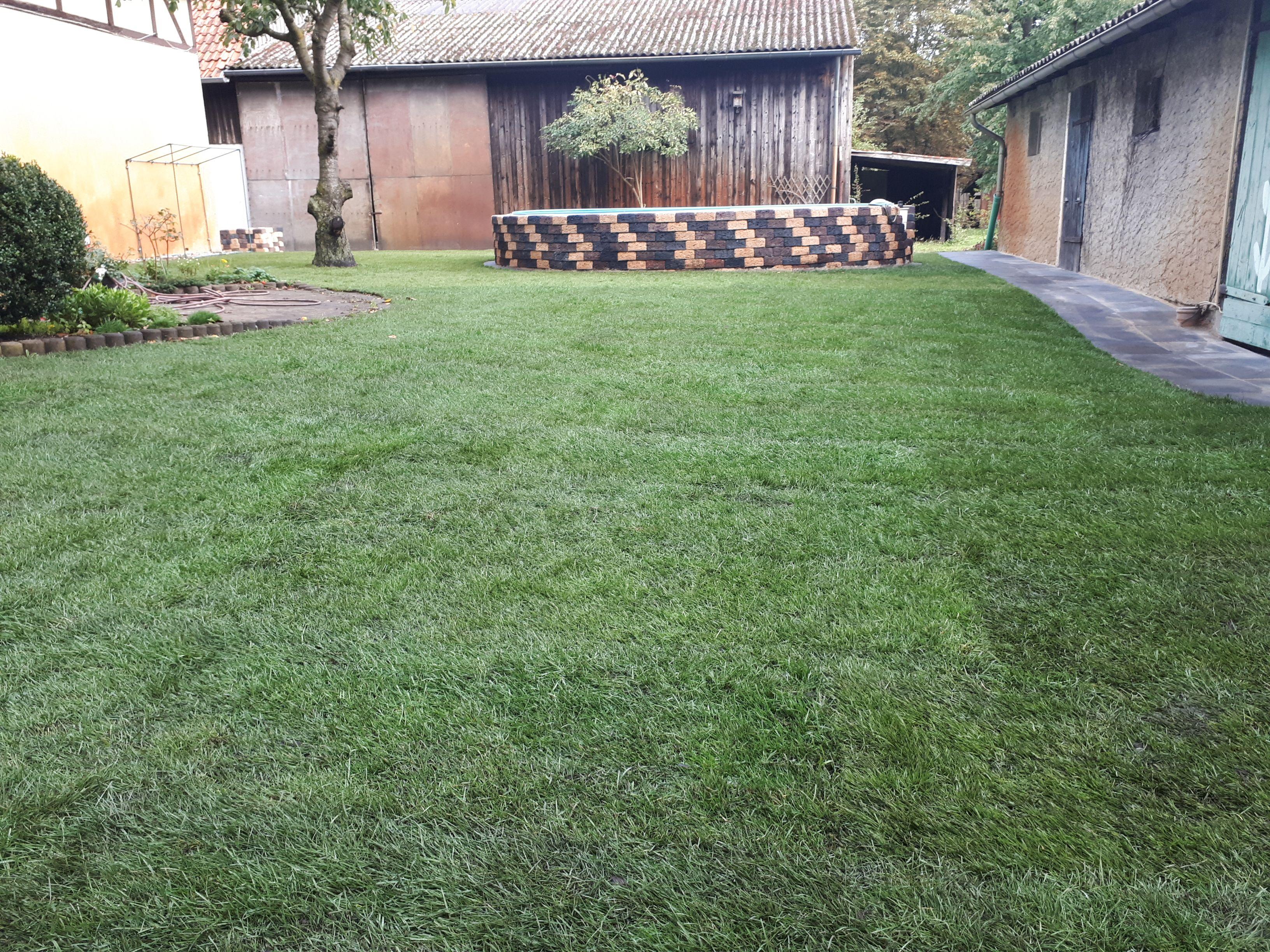 Rollrasen Verlegen In Region Hannover Rasen Gartenpflege Gartengestaltung