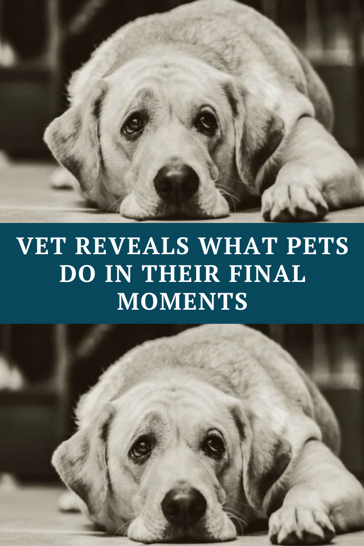 Vet Reveals What Pets Do In Their Final Moments Teaches All Pet Owners A Lesson In 2020 Wtf Funny Awkward Funny Amazing Stories