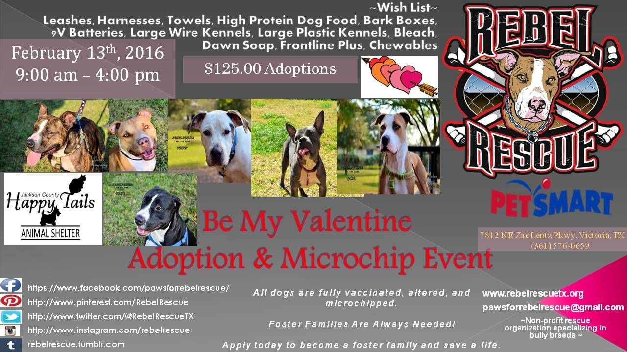 Be My Valentine Petsmart Adoption Microchip Event Be My