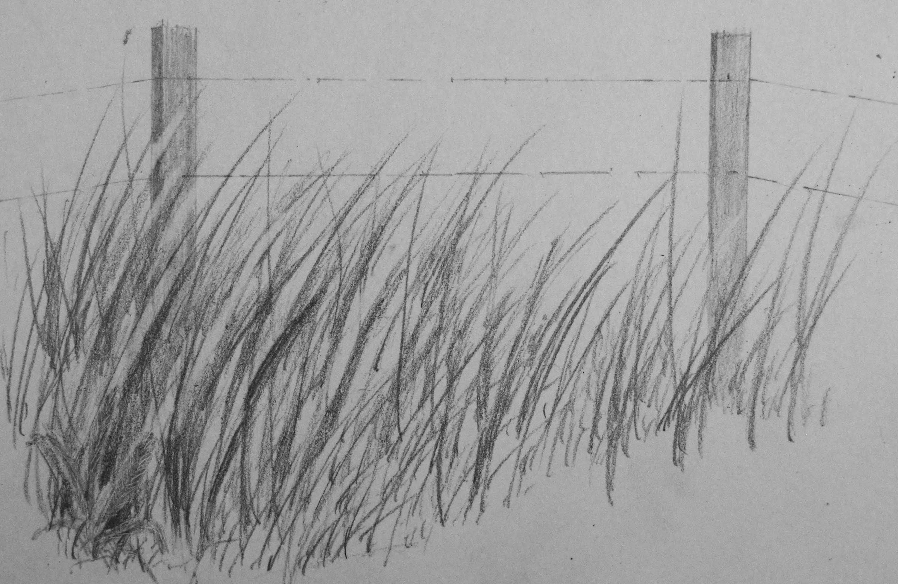 How To Draw Realistic Tall Grass Realistic Drawings Grass Drawing Landscape Drawings