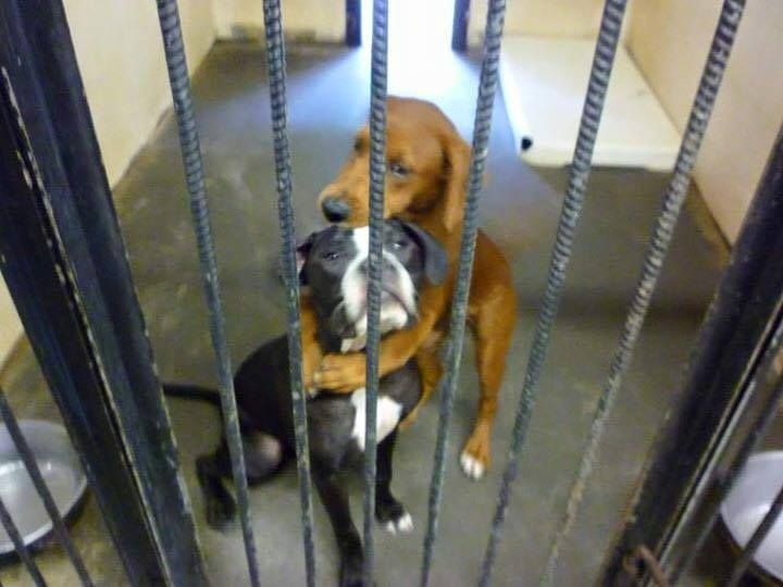 Shelter Dog Hugs Her Friend, And The Heart-Wrenching Photo Saved Both Their Lives. - http://www.lifebuzz.com/hugging-dog/