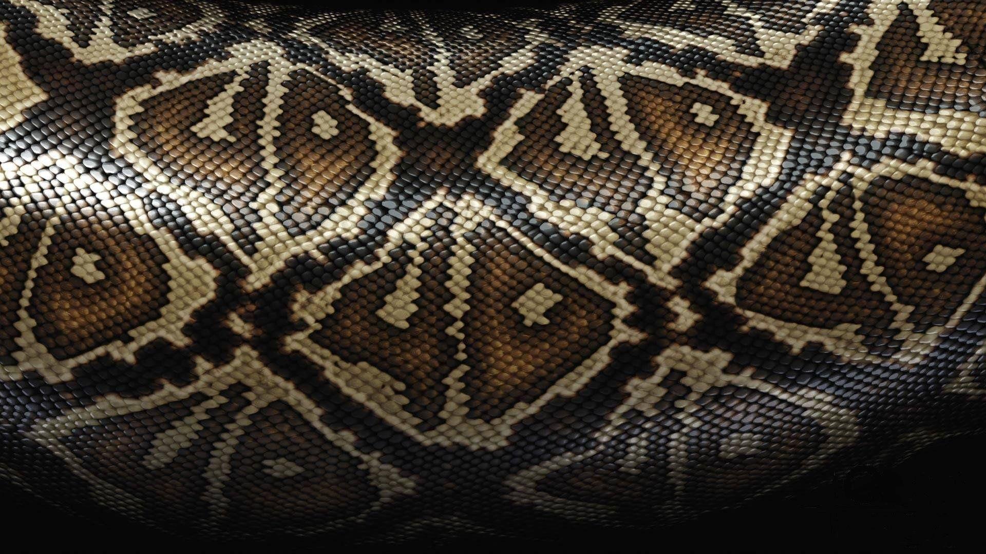 Snake Skin Snake Skin Wallpaper For Desktop And Mobile