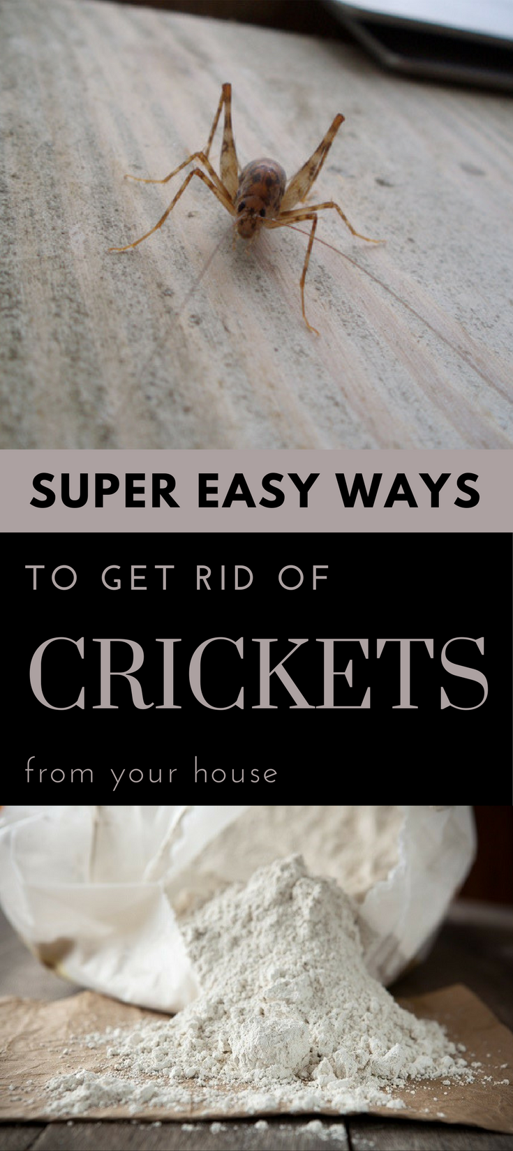 How To Get Rid Of Crickets In The House Nz