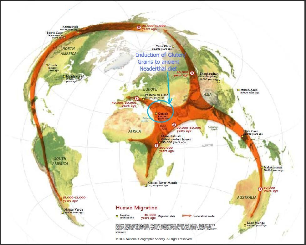 Natlgeohomosapienmigrationfescentg 978784 pixels map of human migration in history throughout the world with a link to the genographic project conducted by national geographic via amazing science gumiabroncs Gallery