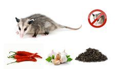 Healthy Living Natural Repellents For Getting Rid Of Possums On Your Property Natural Repellent Repellents Possum