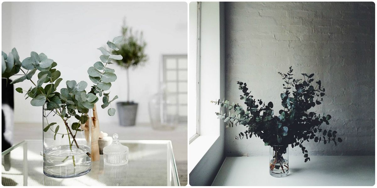 eucalyptus plante quartier cr ativ plante tendance 2015. Black Bedroom Furniture Sets. Home Design Ideas