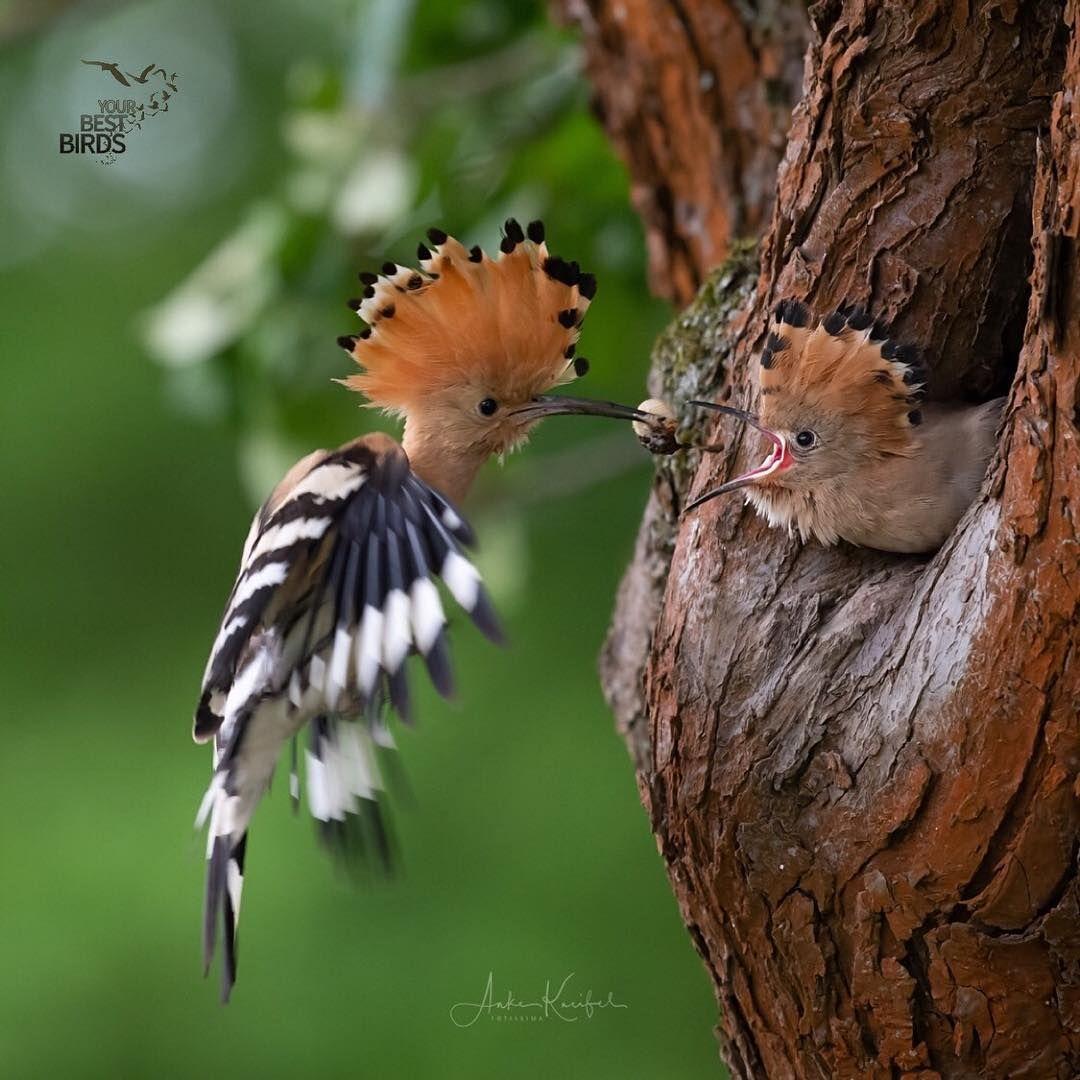 Your Best Birds On Instagram Congratulations Birder Of The Day Anke Kneifel Bird Of The Nature Photography Animals Wild Birds Photography Animals
