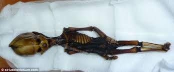 Resultado de imagem para esqueleto de ata