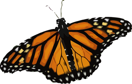 400 Free Monarch Butterfly Butterfly Images Pixabay Butterfly Images Nature Images Monarch Butterfly