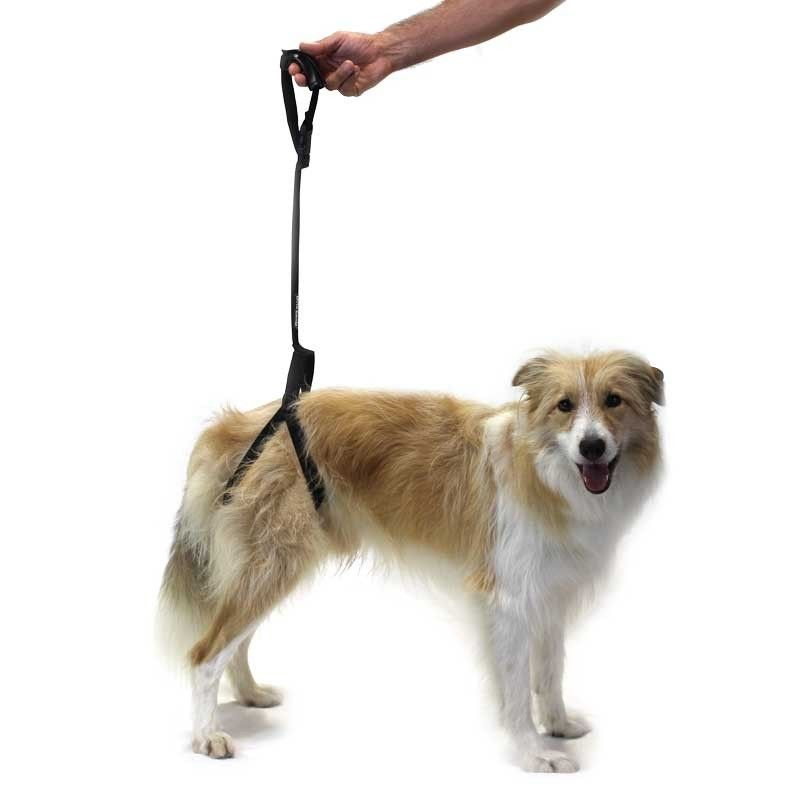 Rear Support Harness Dogs Disabled Dog Dog Wheelchair