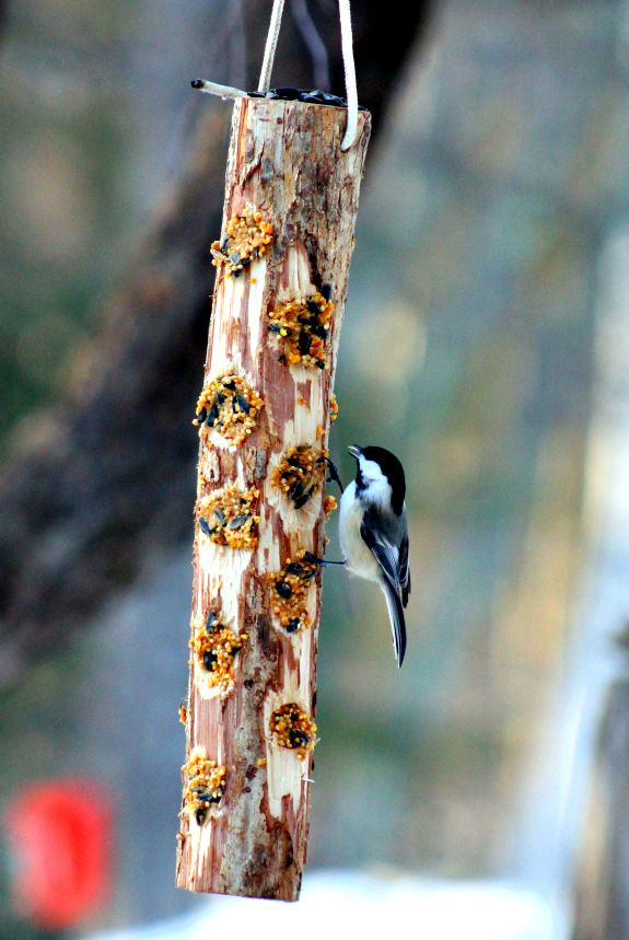 bird feeders homemade downeast building birdfeeder farm feeder my dinky thunder