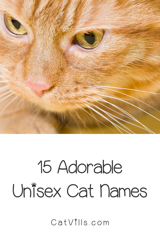 15 Unique Adorable Unisex Cat Names Catvills In 2020 Cat Names Cats Funny Cats