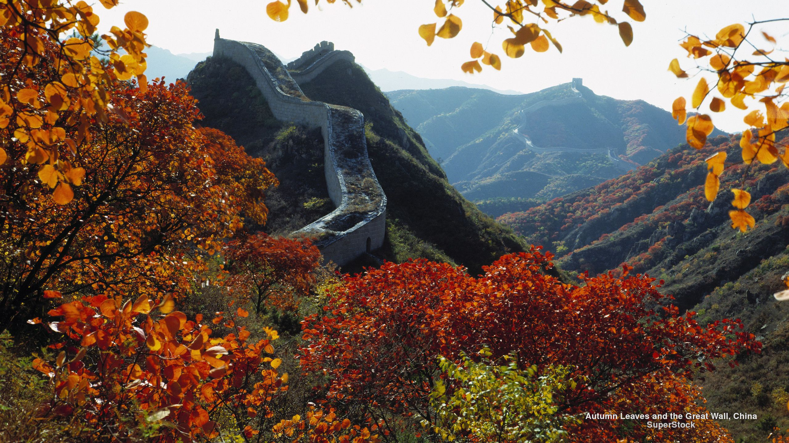 Free Fall Wallpaper Autumn Leaves and the Great Wall