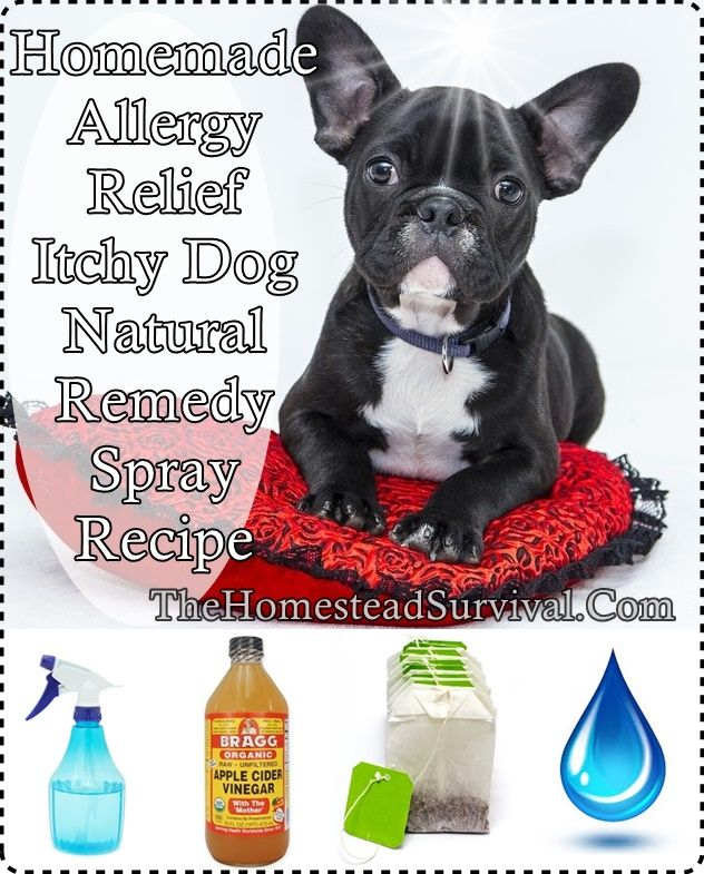 Homemade Allergy Relief Itchy Dog Natural Remedy Spray With