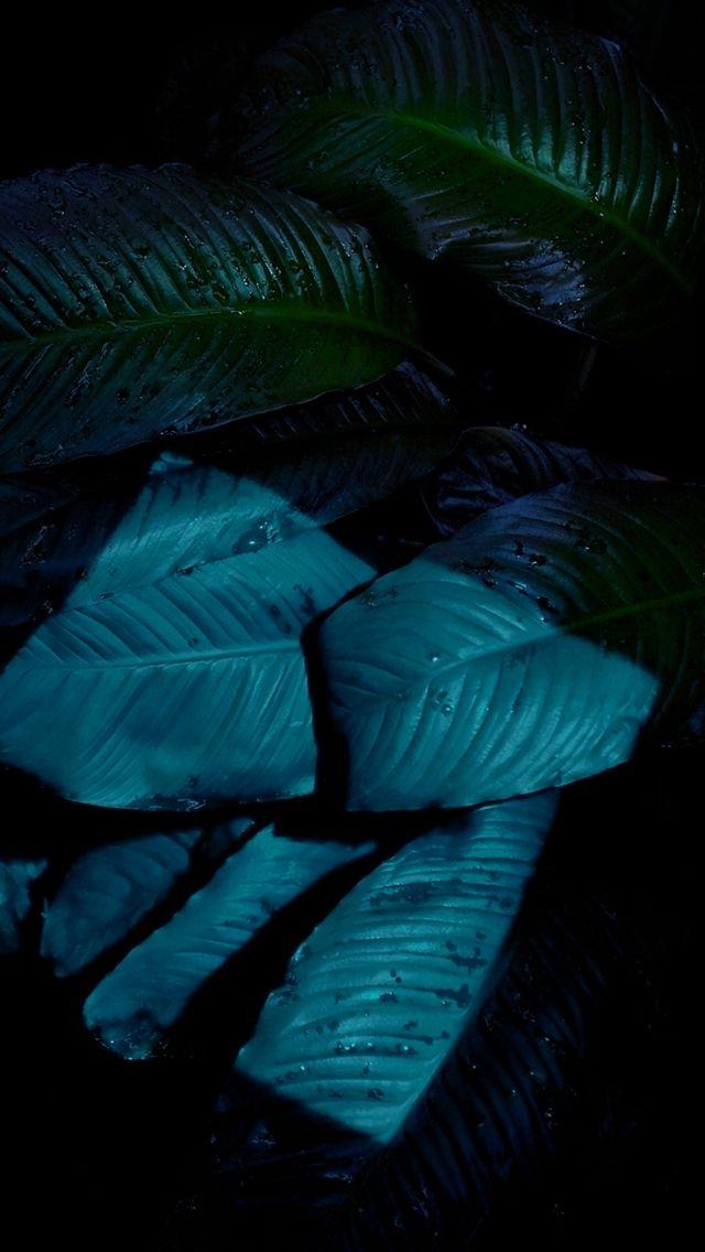 IOS9 Night Dark Moonlight Shine Blue Leaf Macro IPhone 5s Wallpaper