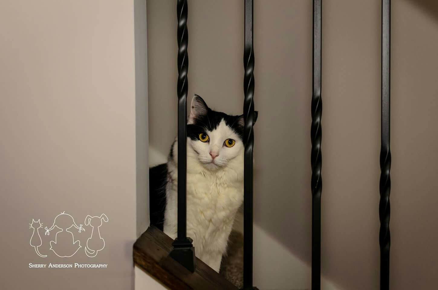 Kitty jail LOL Book your session today at www