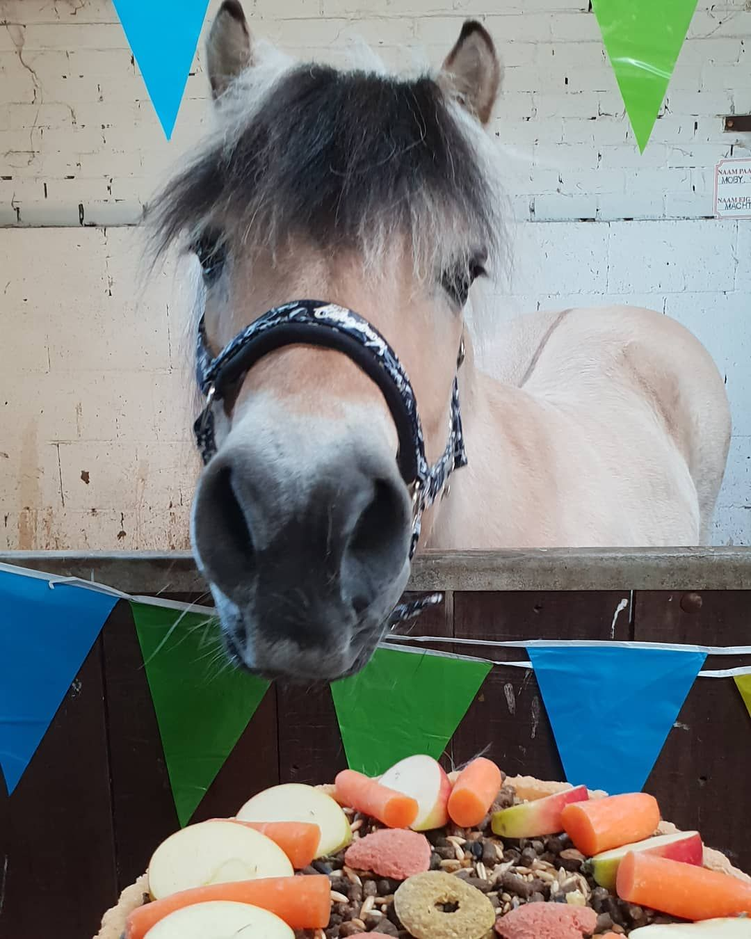 how to celebrate the year of the horse
