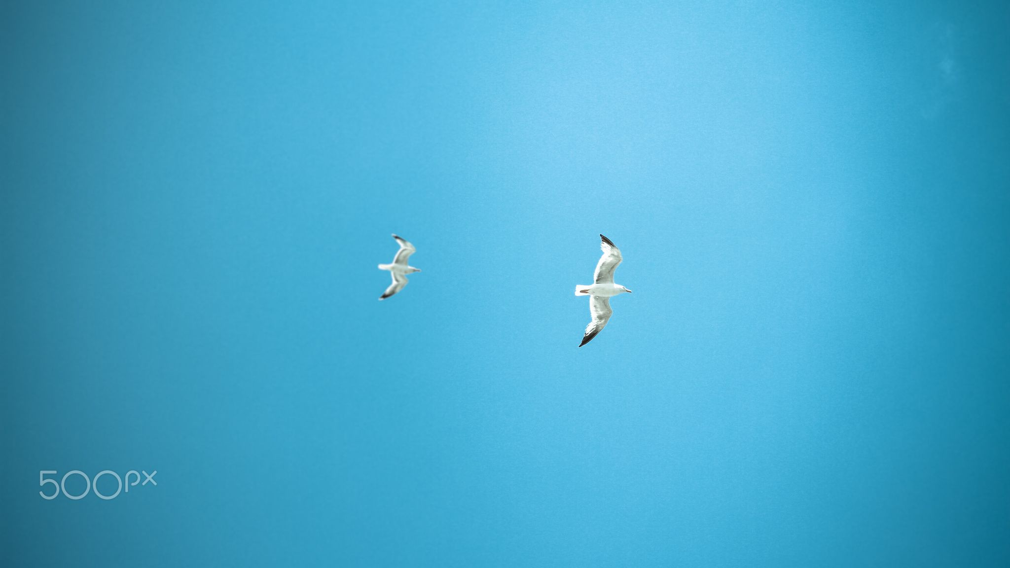 Birds Flying In The Sky - You'll be free at the moment you wish to be.