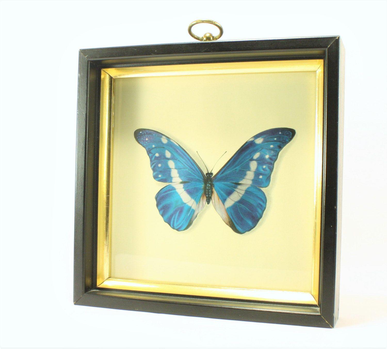 Vintage Framed Morpho Rhetenor Helena Butterfly Art, Insect Art ...