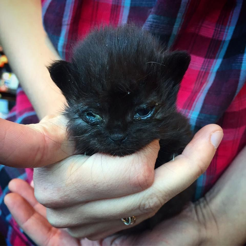Dwarf Kitten Found On Concrete Slab Gets Help To Grow In These Adorable Photos Kittens Dwarf Kittens Cats And Kittens