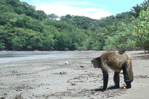 Curu, Costa Rica.