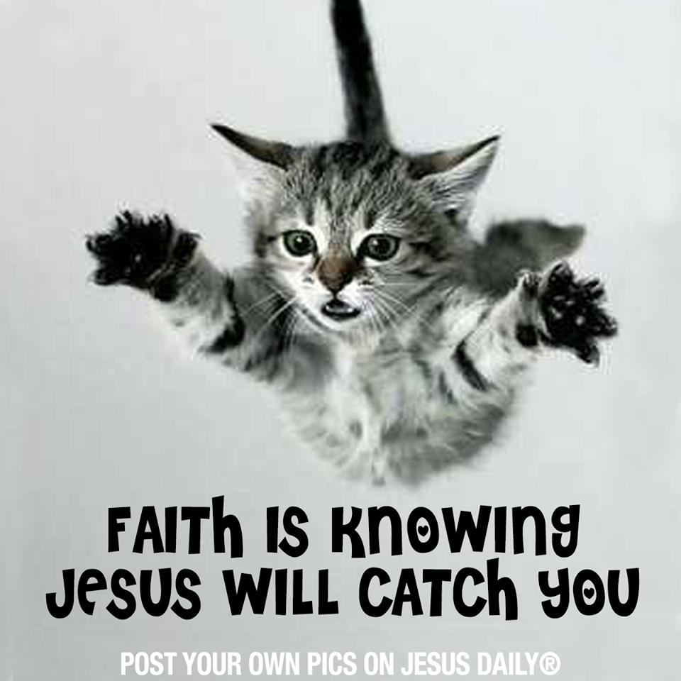 Faith Is Knowing Jesus Will Catch You Kittens Cutest Cats Animals
