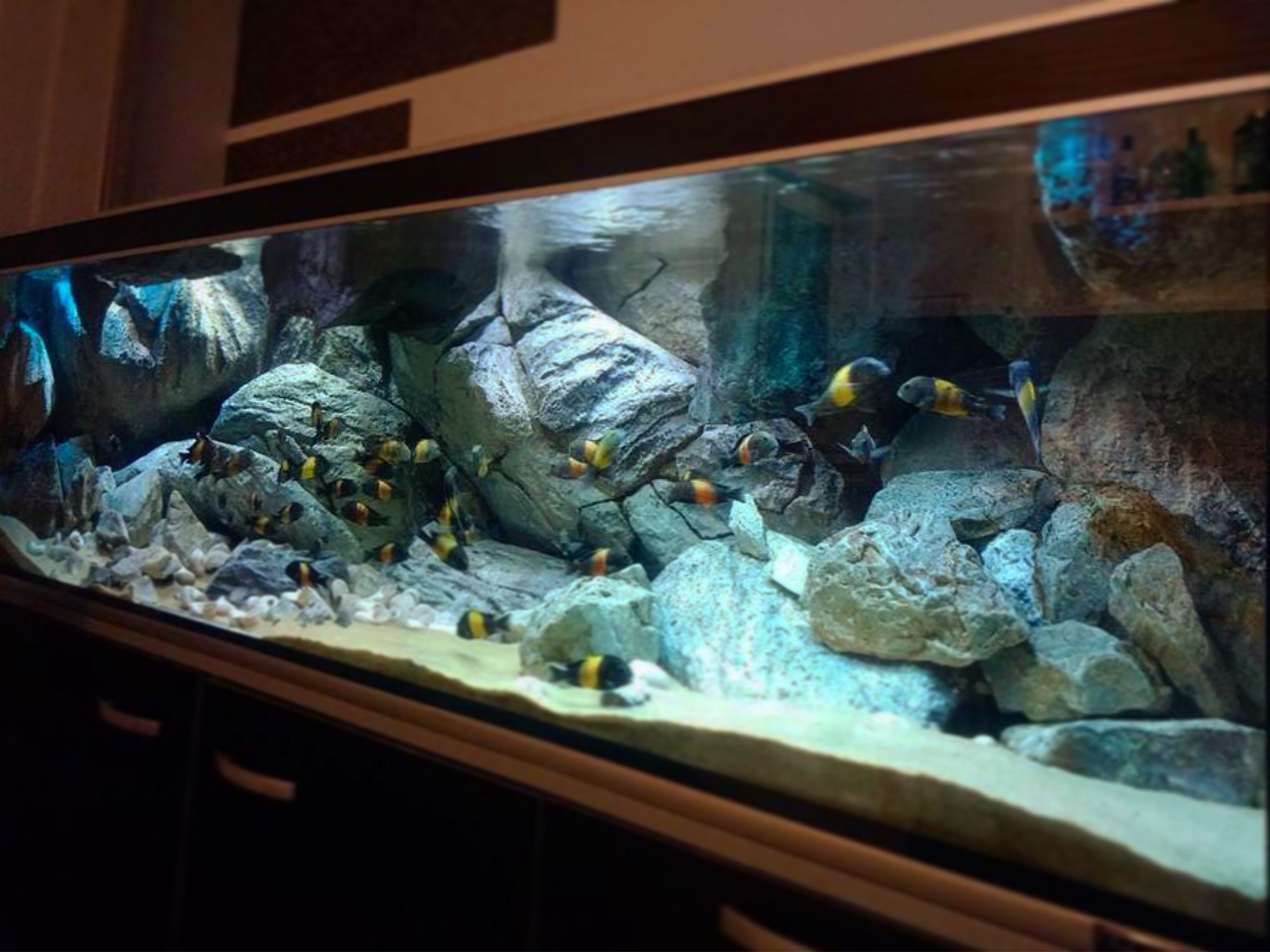 Pin By Beelink Jad Aan On 3d Background African Cichlid Aquarium Aquarium Cichlid Aquarium