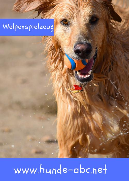Welpenspielzeug Onlineshop Gunstig Kaufen 30 Welpen Hund Anschaffen Spielzeug Hund