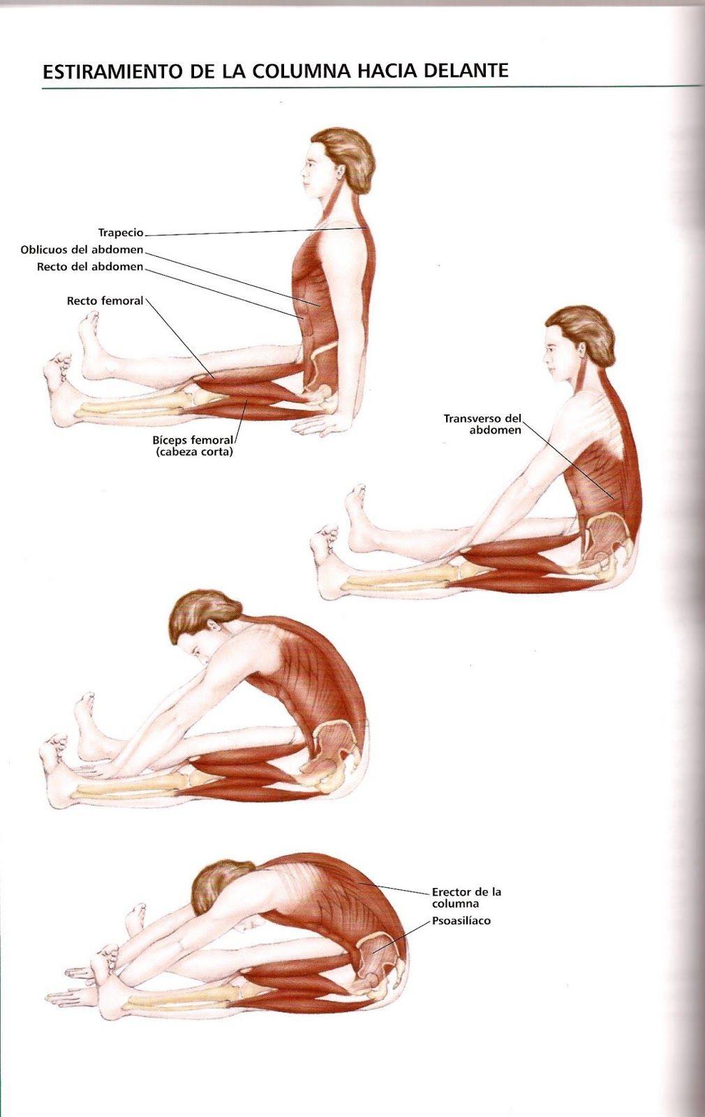 Estiramiento de columna   Anatomía, estiramientos.   Pinterest ...