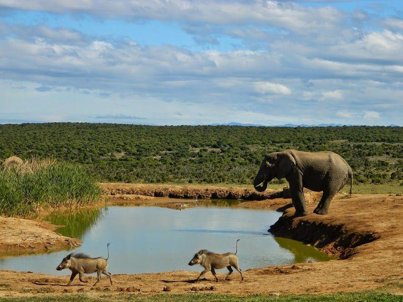 #Wildlife #elephant #warthog #photography