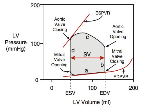 pressure volume loops - google search | cardiac physiology ... pv loop diagram phrase feedback loop diagram #11