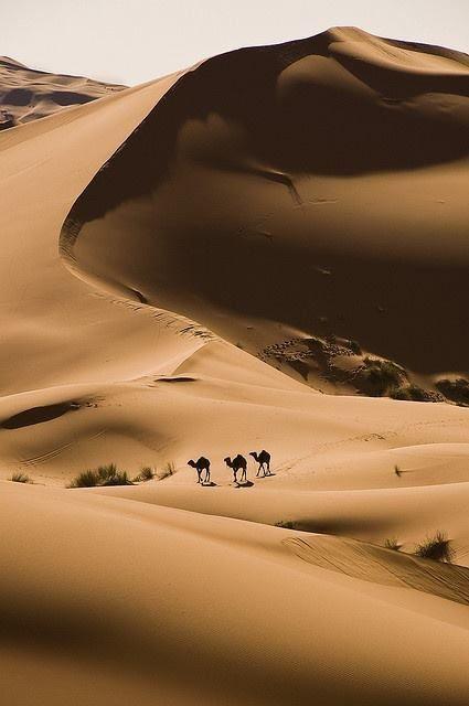 No deserto, como este do Sahara, em África, há muita areia. Não há água, nem plantas, e poucos animais. Os camelos viajam através do deserto por armazenarem água e serem muito resistentes.