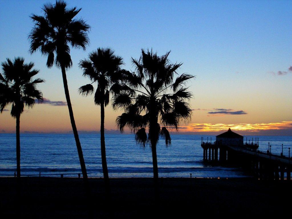 California Beach Palm Trees The Best Beach Weddings