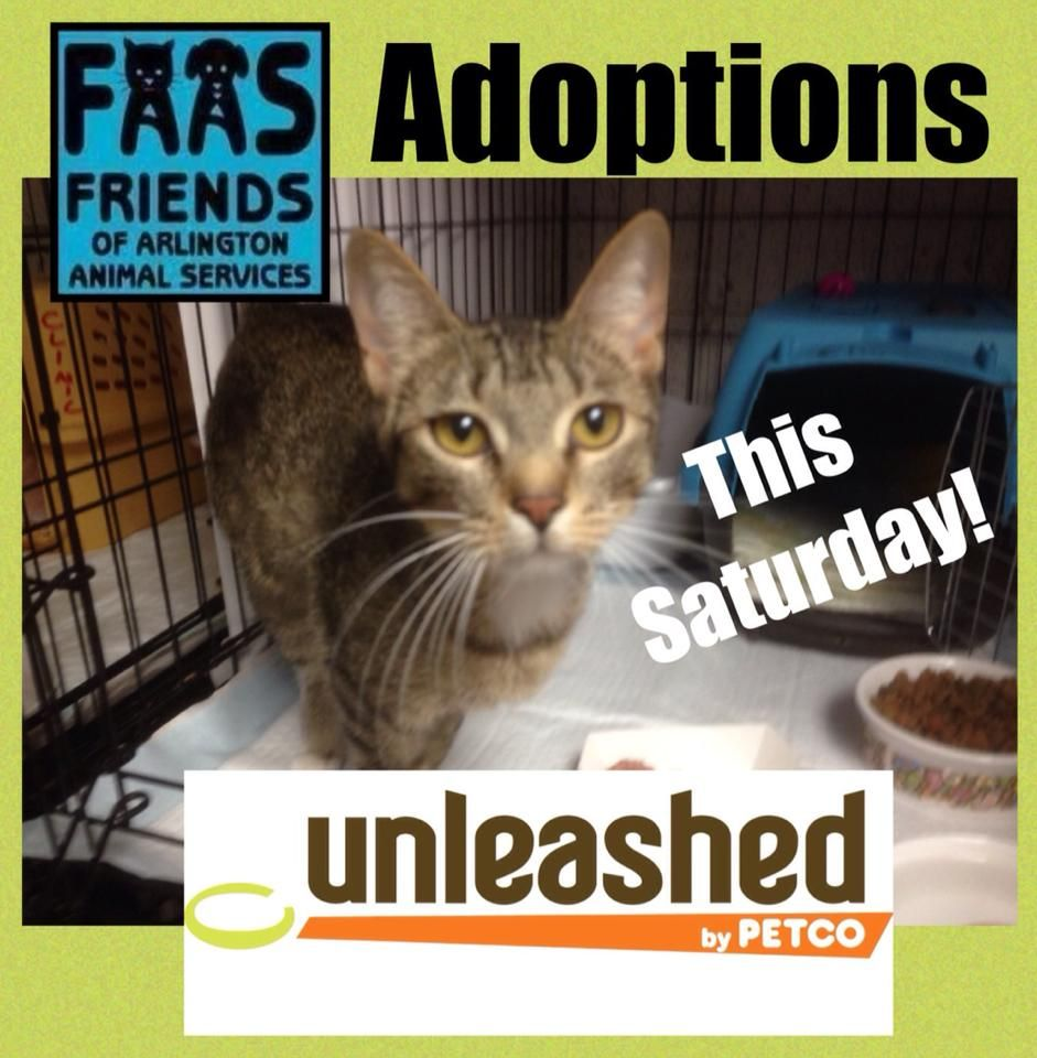 Tomorrow Saturday July 11 2015 Come To An Adoption Event At Petco Unleashed 2717 West Park Row Drive Arlington Tx From 11am Petco Dog Adoption Adoption