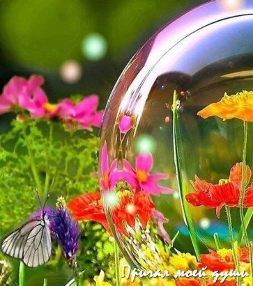 (33) Одноклассники | Мыльные пузыри, Пузыри, Садовые шары