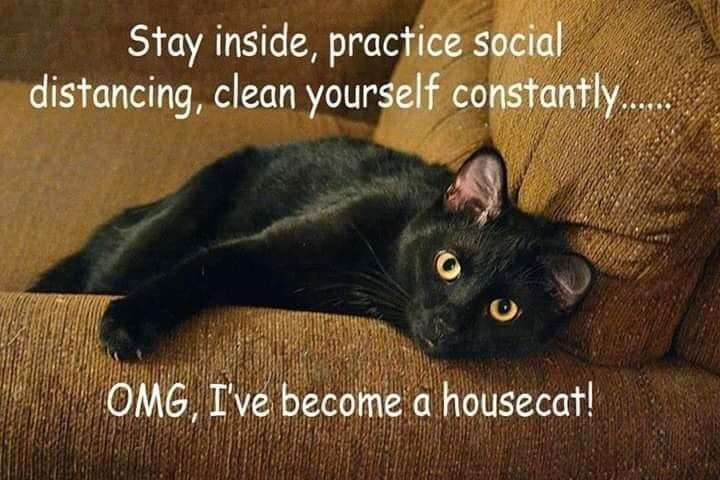 Quarantined Cat Memes For Your Isolated Entertainment in