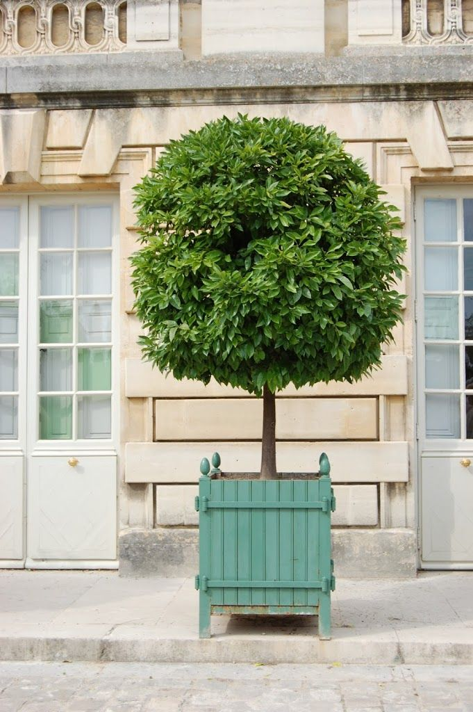 habitually chic u00ae  u00bb topiary chic