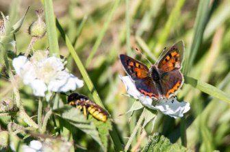 Sind Schmetterlinge Insekten