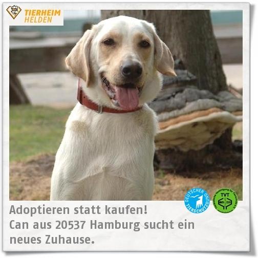 Yes he Can! Can sucht im Tierheim Hamburg ein neues