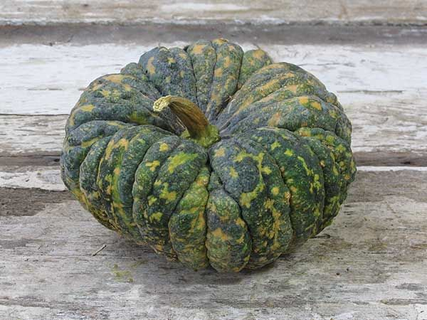 Beautiful fruit weigh about 5 lbs  This variety is flattened and
