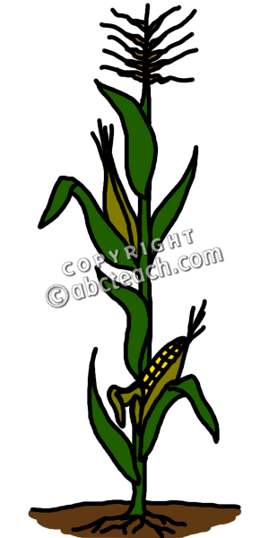 corn stalk clip art corn stalk clip art dried corn walls rh pinterest co uk corn stalk clipart